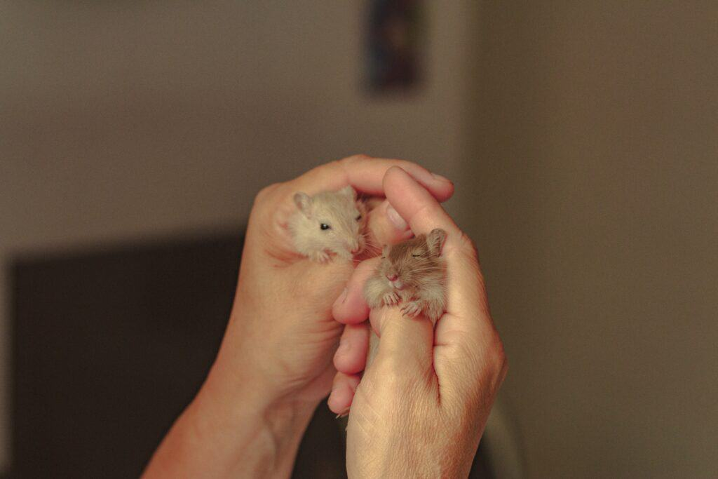 How to care for a Hamster: Tips