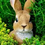 The Dwarf Rabbit: What you should know before buying a dwarf rabbit