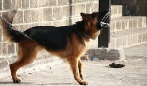 Do-you-have-an-aggressive-dog-Heres-what-to-do