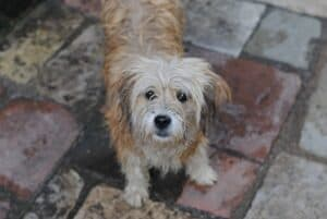 Dogs-and-rain-what-to-do-when-the-dog-doesnt-want-to-go-out-1