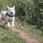 How much exercise should the dog get everyday?