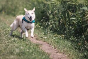 How-much-exercise-should-the-dog-get-everyday