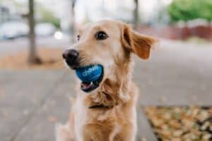 How-to-Train-Your-Dog-to-Fetch-method-tips