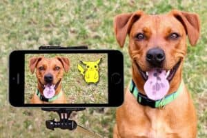 How-to-make-your-dog-famous-on-Instagram