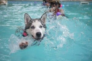 How-to-overcome-your-dogs-fear-of-water