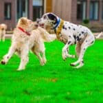 How to stop a dog fight?