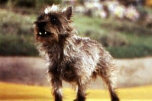The-most-famous-dogs-in-movies-and-TV