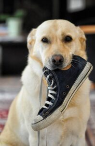 When-scolding-the-dog-leads-to-misconduct