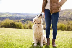 Why-do-dogs-smell-our-private-parts