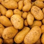 Can Dogs eat Potatoes or Sweet Potatoes? Are Potatoes safe for dogs? (...Yes)