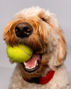 4-objects-or-toys-not-suitable-for-dogs