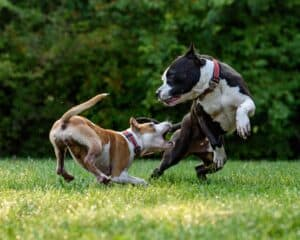 5-tips-for-controlling-a-hyperactive-dog