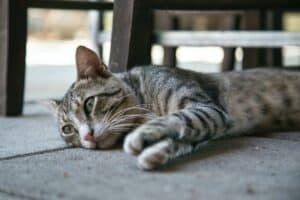 6-animals-that-can-suffer-from-depression