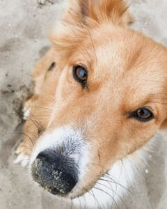 6-interesting-facts-about-the-dogs-nose