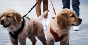 7-tips-for-your-dog-to-stop-pulling-on-the-leash