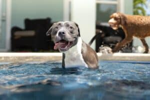 8-reasons-why-your-dog-needs-to-swim