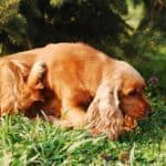 Allergens in dogs: the most common and what to do