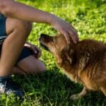 Do dogs perceive the stress of their owners?