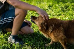 Do-dogs-perceive-the-stress-of-their-owners