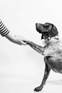 Do-you-like-animals-Here-are-ten-ways-to-help-them