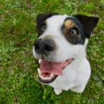 Everything you need to know about periodontitis in dogs