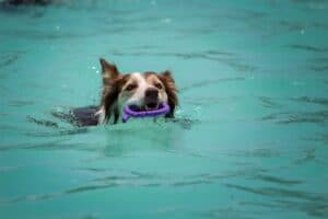 Games-to-play-in-the-pool-with-the-dog