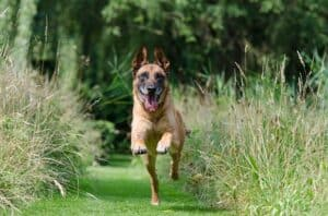 How-Much-Exercise-Does-Your-Dog-Need