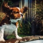 How to help your dog fight the heat