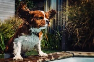 How-to-help-your-dog-fight-the-heat1