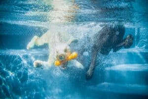 How to teach your dog to dive underwater