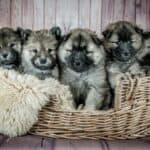 Neonatal mortality in puppies: 4 causes