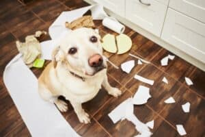 Obsessive-Compulsive-Disorder-in-Dogs-Symptoms-and-Treatment