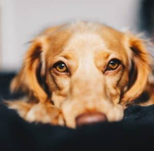 Stress-in-dogs-what-causes-it