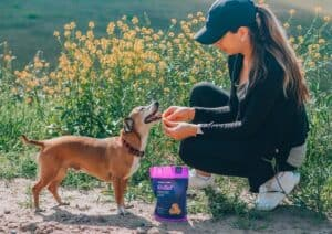 The-different-types-of-positive-reinforcement-for-dogs