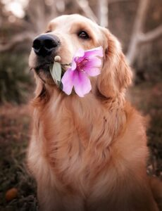 The-memory-of-dogs-how-do-they-recognize-meal-times
