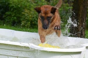 Tips-for-buying-a-dog-pool