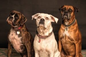 What-is-Canine-Psychology