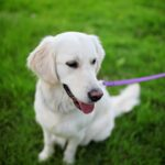 What to do to make your dog friendlier