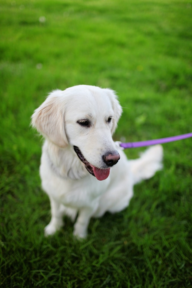 What-to-do-to-make-your-dog-friendlier