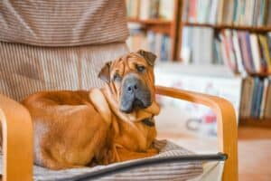 When does a pet need a psychiatrist