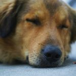10 signs when a dog is about to die