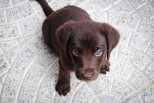5 things you should never do to your dog