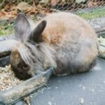 Rabbit Food and Nutrition