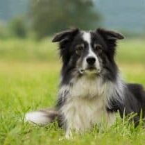10-Dog-Breeds-That-Are-Easy-To-Train