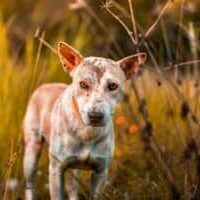 Dermatitis-in-dogs-how-to-treat-it