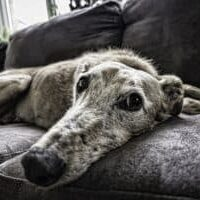 Diarrhea-in-older-dogs-what-to-do