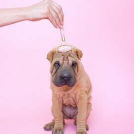 Discover-the-benefits-of-dog-massages