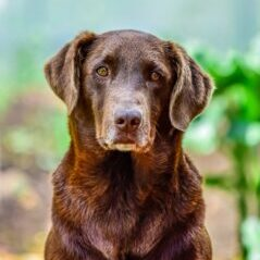 Diseases-of-older-dogs-what-they-are-and-how-to-treat-them