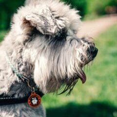 Hair-loss-in-dogs-causes-and-treatment