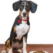 How-to-choose-the-best-dog-food